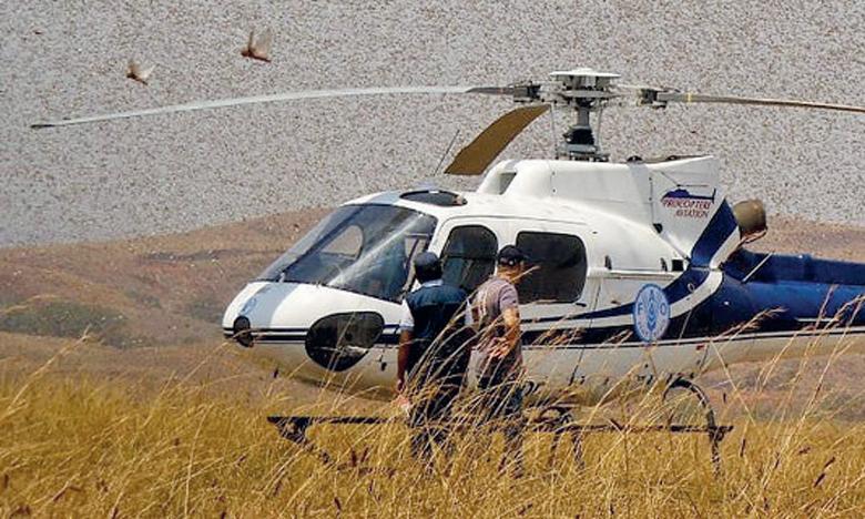 Depuis janvier, les opérations de lutte contre les invasions du criquet ont permis d'éviter la perte de 2,7 millions de tonnes de céréales d'une valeur de 800 millions de dollars. Ph. FAO