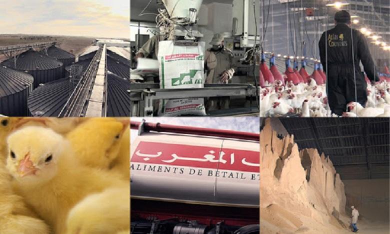 Aviculture : Le marocain Zalar Holding sur un partenariat de taille au Togo