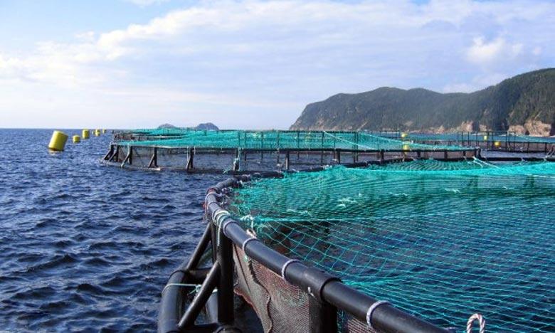 L'NRH a présenté son plan d'action des activités de recherche scientifique au titre de l'année 2021 pour accompagner le développement durable du secteur de la pêche et de l'aquaculture. Ph : DR