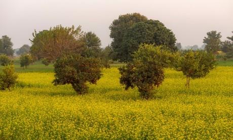 La production mondiale d'agrumes tendres attendue à la hausse