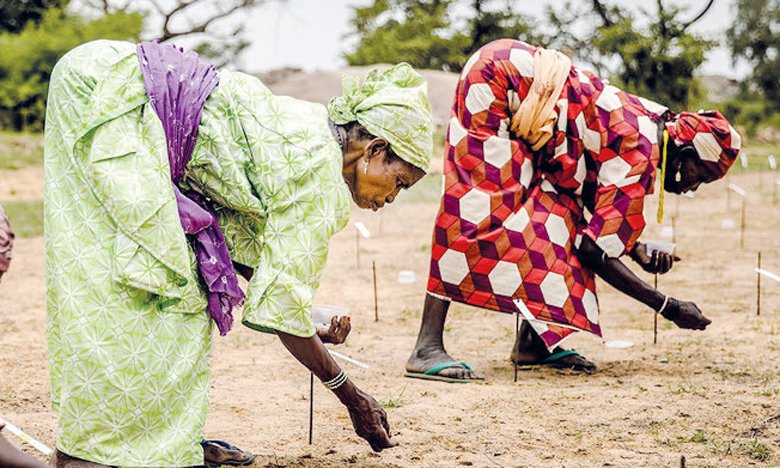 Le Sahel est caractérisé par une saison pluvieuse de seulement 3 à 4 mois. La restauration des terres y est donc étroitement liée  au calendrier saisonnier. Ph. FAO