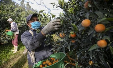 Démantèlement d'une filière de saisonniers marocains en France