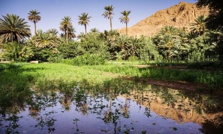 Lancement du projet de Promotion de la gestion intégrée des Ressources dans l'oasis