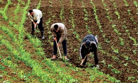 Agriculture solidaire : L'ADA réaménage les données des projets