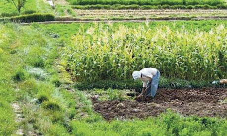 L'objectif 2020 du Plan Maroc vert réalisé à 89%