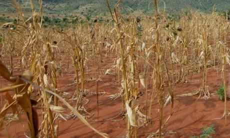 L'Afrique, première victime du changement climatique selon l'Onu