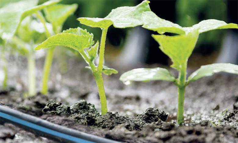 L'agriculteur reçoit des notifications pour lancer l'action d'irrigation, sur l'application, par l'envoi d'un SMS ou par un appel direct. Ph. DR