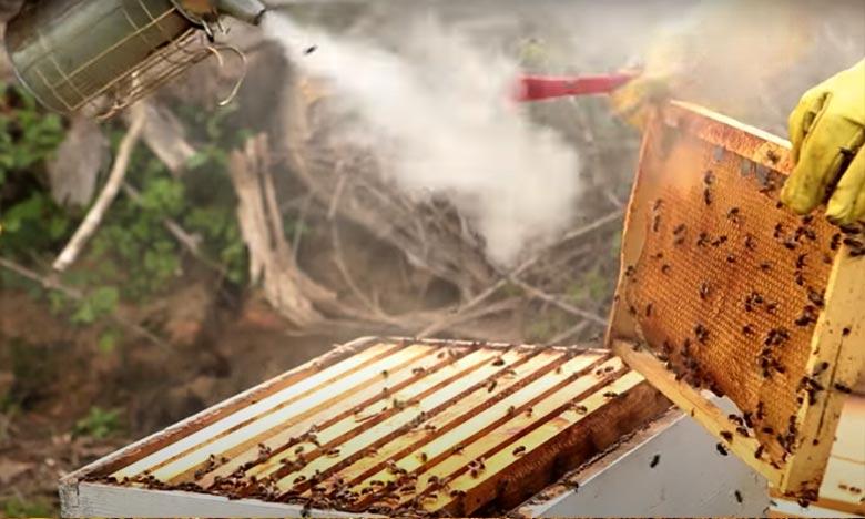 En cinq ans, ce seront 50 participantes qui auront appris les bases théoriques et pratiques de l'apiculture. Ph : DR