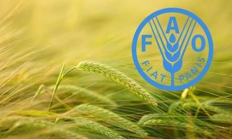 FAO: Quarante-cinq pays auront besoin d'une aide alimentaire extérieure