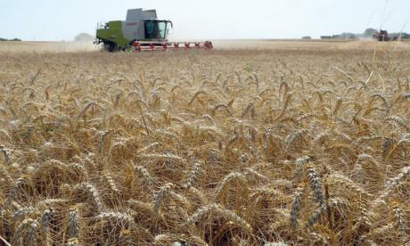 L'Indice FAO poursuit sa progression pour le 9e mois consécutif