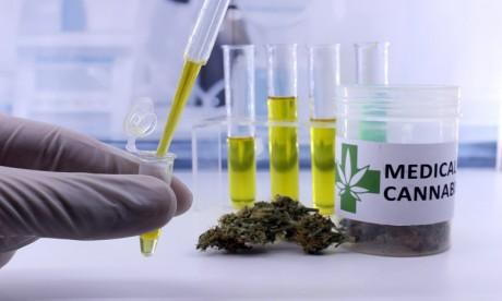 Légalisation du Cannabis: Le projet de loi adopté en Conseil de gouvernement