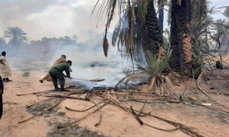 Environ 200 palmiers plantés sur une superficie de 2,5 ha ont été partiellement détruits. Ph : MAP