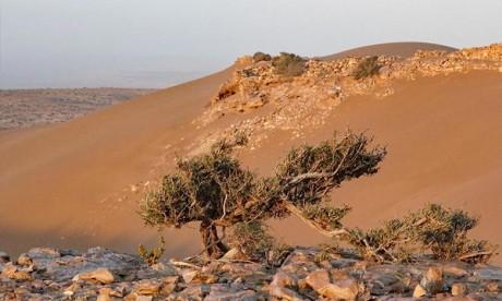 Dakhla-Oued Eddahab: 12 gravures rupestres intègrent la liste du patrimoine national