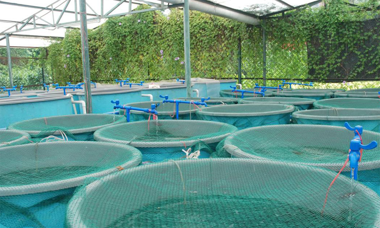 L'aquaculture, un potentiel économique  à fructifier