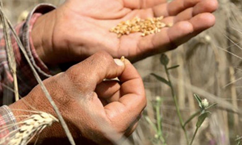 Al Moutmir, approvisionnement en engrais, innovation, digitalisation...  des initiatives au service du développement agricole