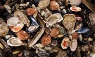 Interdiction de la récolte et la commercialisation des coquillages de la zone Douira-Sidi R'bat