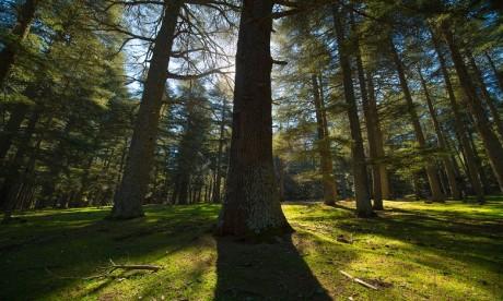Des ONG appellent à adapter la réglementation forestière aux exigences du changement climatique