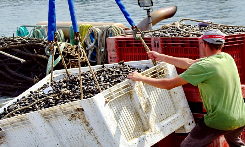 Interdiction de la récolte et la commercialisation des coquillages de la zone Imi Ouaddar