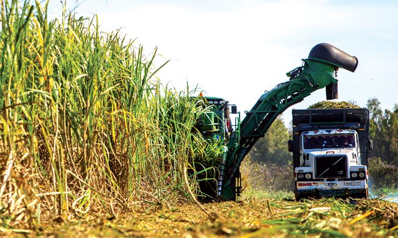 État des lieux, perspectives et défis du secteur sucrier