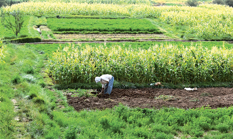 Cultures d'automne : la superficie emblavée atteint 4,9 millions d'hectares