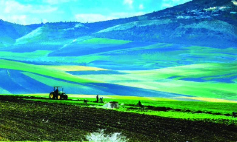 Agriculture : secteur clé pour la relance de l'économie marocaine