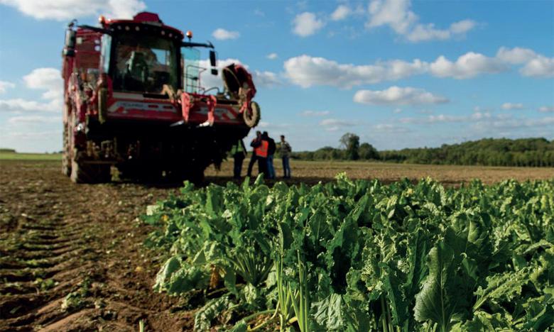 La production de betterave sucrière, caractérisée par sa précocité, atteindra cette année des records historiques.
