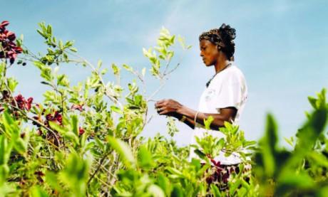 Déjà salée, la facture risque d'être cuisante pour l'Afrique