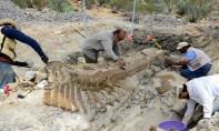 La queue du dinosaure a été découverte en 2013 dans la municipalité de General Cepeda, dans l'Etat de Coahuila  au nord du Mexique. Ph. AFP/Archives