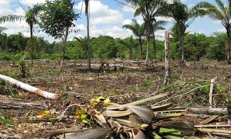 Déforestation: des dizaines de distributeurs menacent le Brésil de boycott