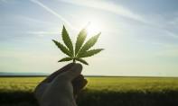 Tanger abritera le 1er Congrès marocain sur l'utilisation des dérivés du cannabis