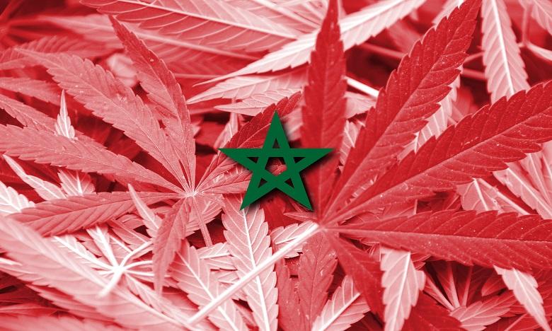 Cannabis médical: Les principaux points des études menées par le ministère de l'Intérieur