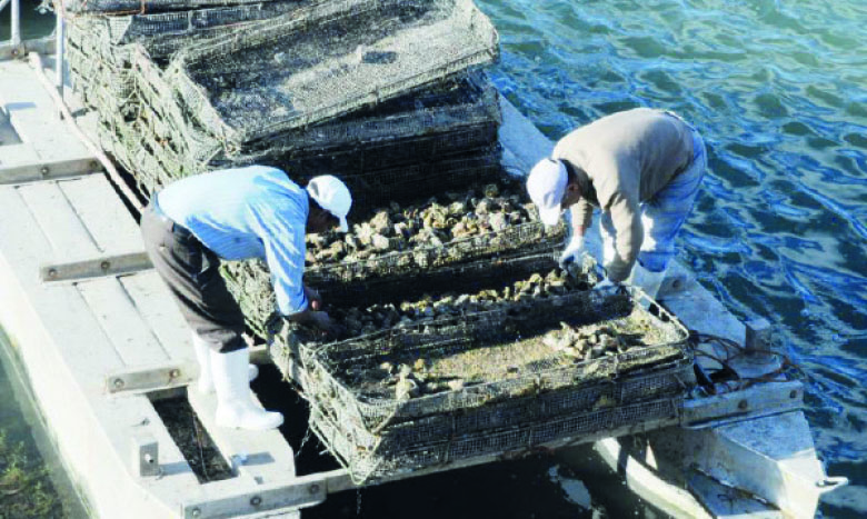 Les plans d'aménagements achevés ont permis d'identifier un potentiel de production totale dépassant les 200.000 tonnes, dont 64% de pisciculture au niveau des régions de Dakhla-Oued Eddahab, Guelmim-Oued Noun, Tanger-Tétouan-Al Hoceïma