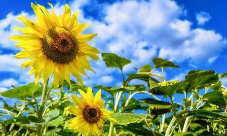 La DGM prévoit pour la journée de ce mardi, un temps stable et peu nuageux à clair ailleurs. Ph : DR