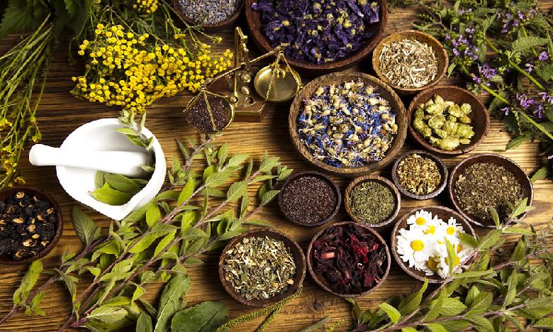 Plantes Médicinales et Aromatiques : Lancement d'un troisième appel à projet