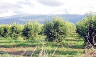 Agrégation agricole : Un nouveau dispositif réglementaire pour des projets d'agrégation de nouvelle génération