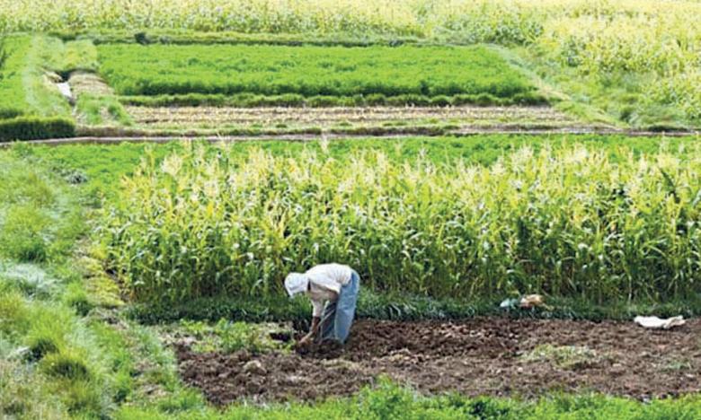 La permanence du futur système de suivi devra être assurée afin de permettre son utilisation en tant qu'outil de collecte continue des informations sur l'évolution de la petite agriculture familiale ainsi que son pilotage.