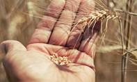 Maroc: Très bonne récolte céréalière 2020-2021