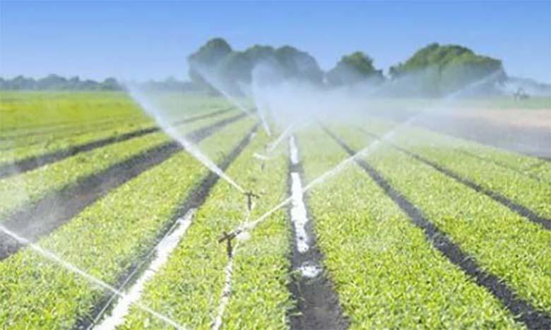 Plan Maroc Vert : 104 milliards de DH investis  et 135.522 ha de terres agricoles mobilisés