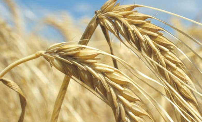 La plus forte baisse, 3%, a été observée chez les céréales, le groupe alimentaire le plus largement consommé à travers le monde. Ph. FAO