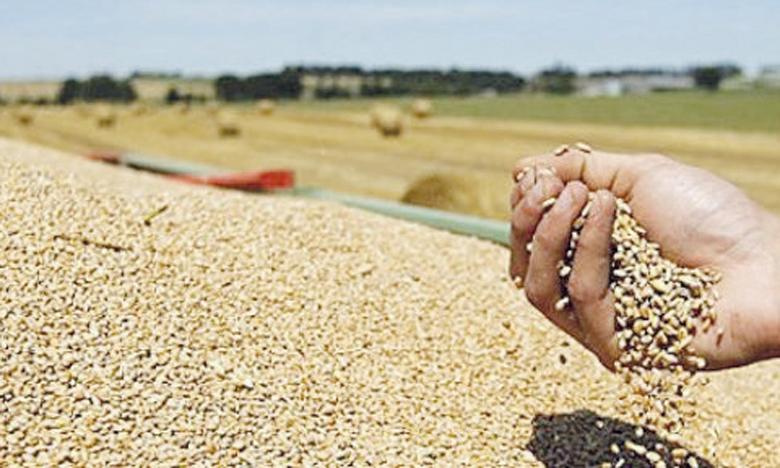 Ces appels d'offres sont lancés au moment où les prix du blé restent volatiles sur le marché international et où l'estimation de la production mondiale pour 2021-2022 est revue à la hausse.