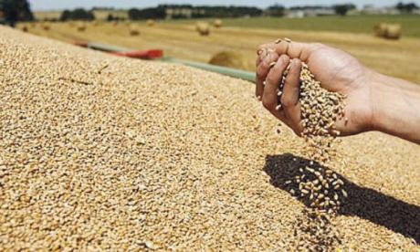 Les prix mondiaux du blé ont augmenté de près de 4% en septembre sur un mois, atteignant ainsi un niveau supérieur de pas moins de 41% à celui enregistré un an auparavant.