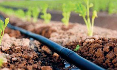 Le développement de la région mise sur l'amélioration de l'attractivité de ses territoires pour attirer les investisseurs dans des secteurs économiques dont l'agriculture.