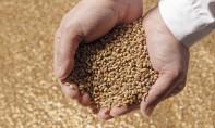 Au titre de la période janvier-septembre 2021, la charge de compensation du blé tendre et de la farine pourrait s'élever à 1,46 milliard de DH.