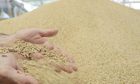 Céréales et légumineuses :  Dématérialisation des procédures d'importation