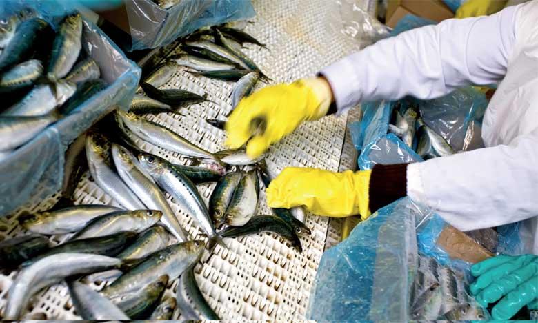 Les industriels de la conserve de poisson appellent à un sauvetage de leur activité
