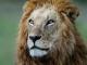 La reine des lions S01E03
