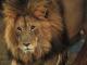 La reine des lions épisode 2